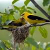 Nuovo piano d'azione per aiutare le regioni a preservare la biodiversità e a raccogliere i vantaggi economici legati alla protezione della natura
