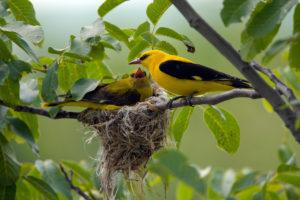nuovo-piano-dazione-per-aiutare-le-regioni-a-preservare-la-biodiversita-e-a-raccogliere-i-vantaggi-economici-legati-alla-protezione-della-natura